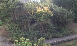 a Plymouth garden rockery overgrown with plants and weeds