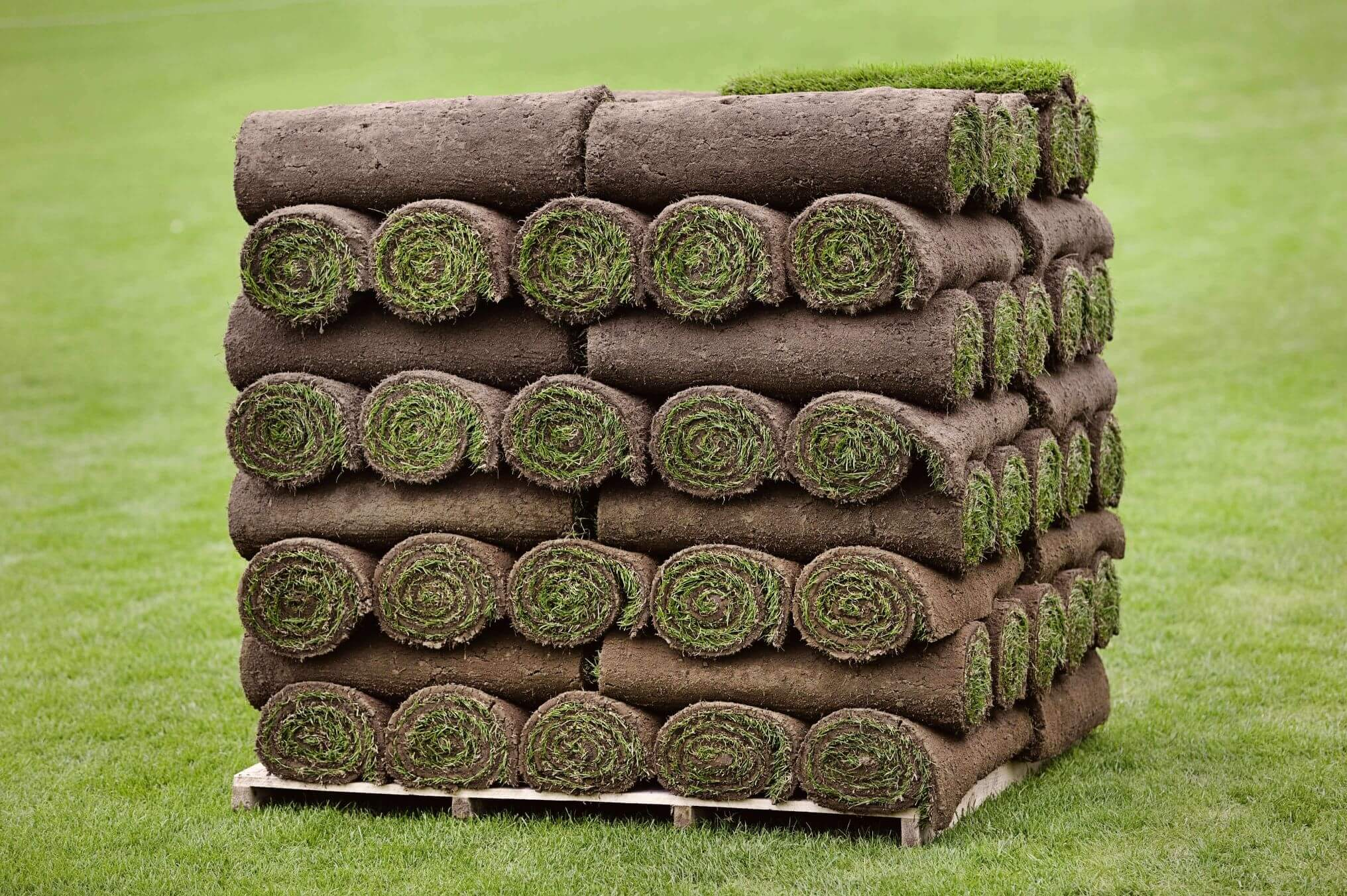 Turf Laying Plymouth - Image of a pallet of rolled and stacked Plymouth Turf - Jackson Garden Services