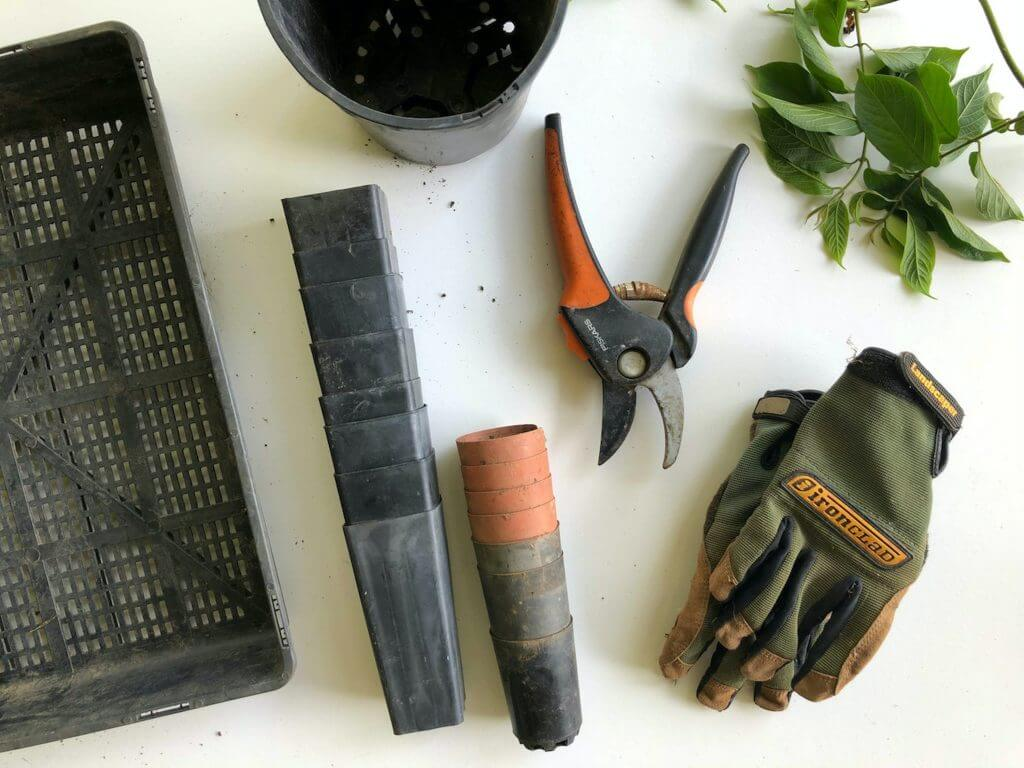 What to Plant in August & September: Flatlay image of gardening gloves, various gardening tools and small seed pots.