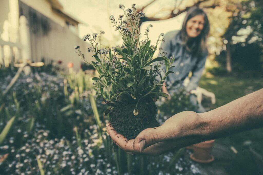 What to Plant in August & September: Selective focus image of a person holding a flower in their hand.