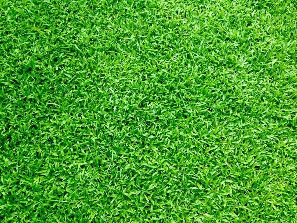 Artificial Grass Benefits: Close up image of an artificial lawn.