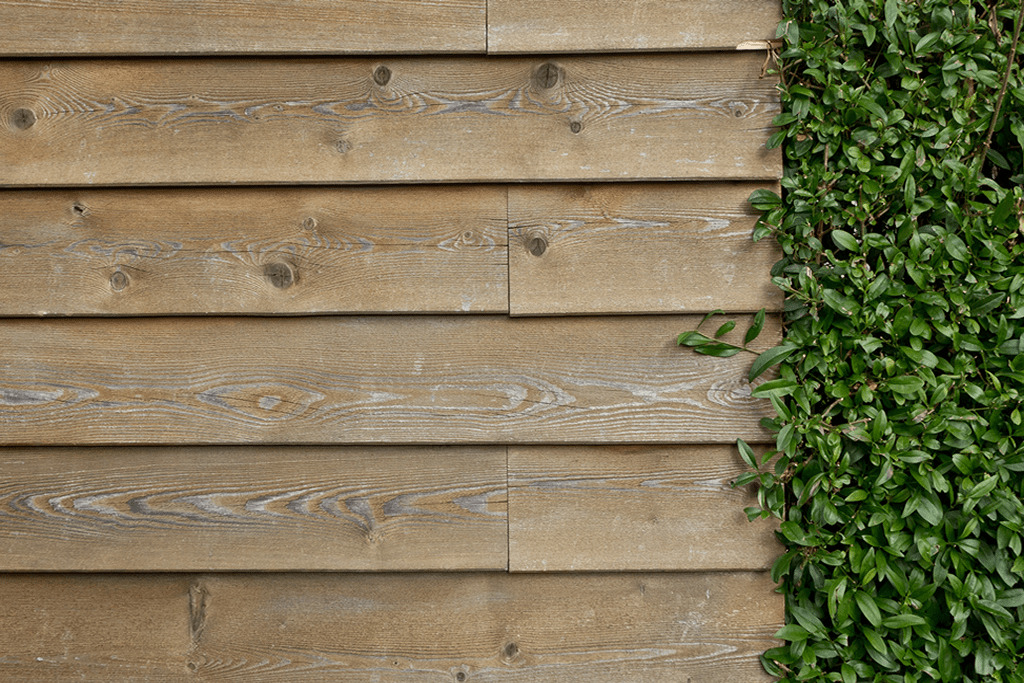 Fence Inspection: Image of a light brown wooden feather edge fence, with overgrown ivy to the right hand side.