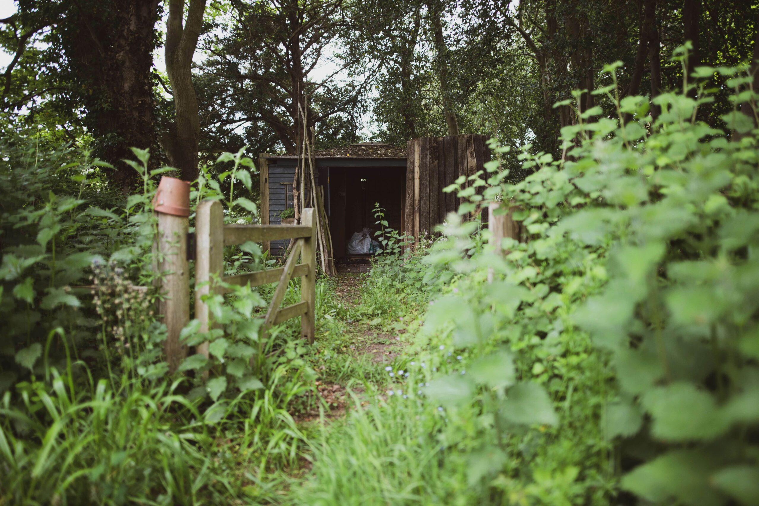 Garden Clearance: Image of an overgrown garden.