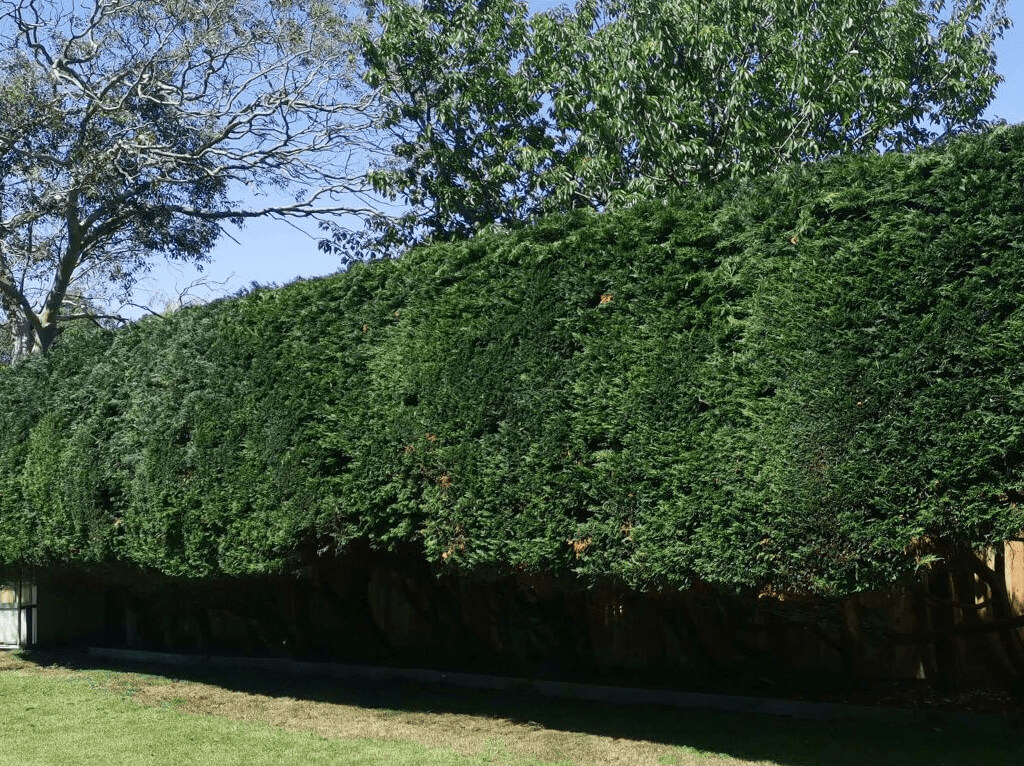 Landscaping Services: Image of trimmed hedges