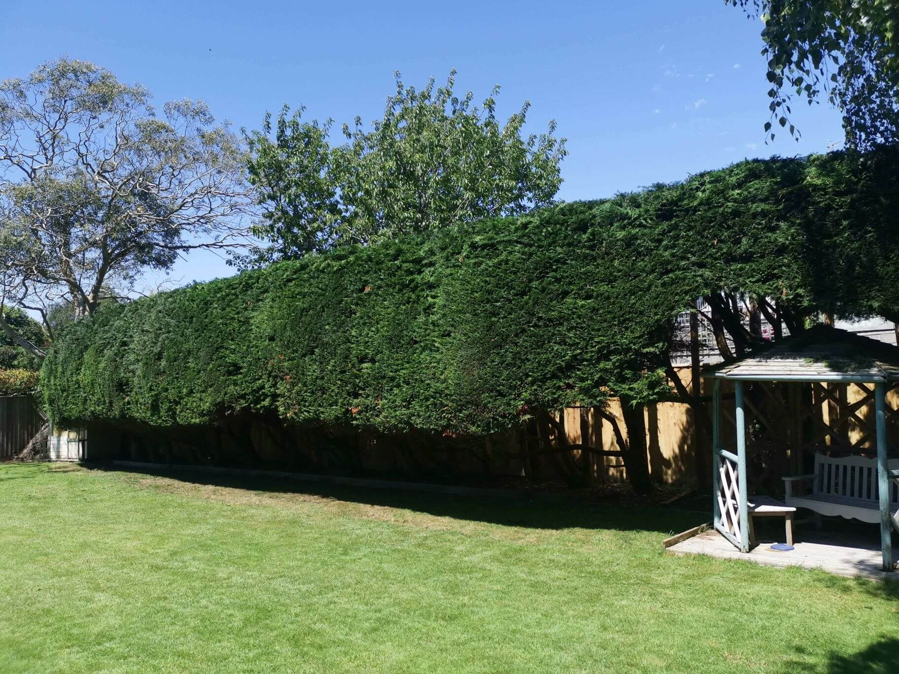 Planting Services: Image of trimmed hedges.